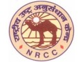 national-research-centre-on-camel-small-0