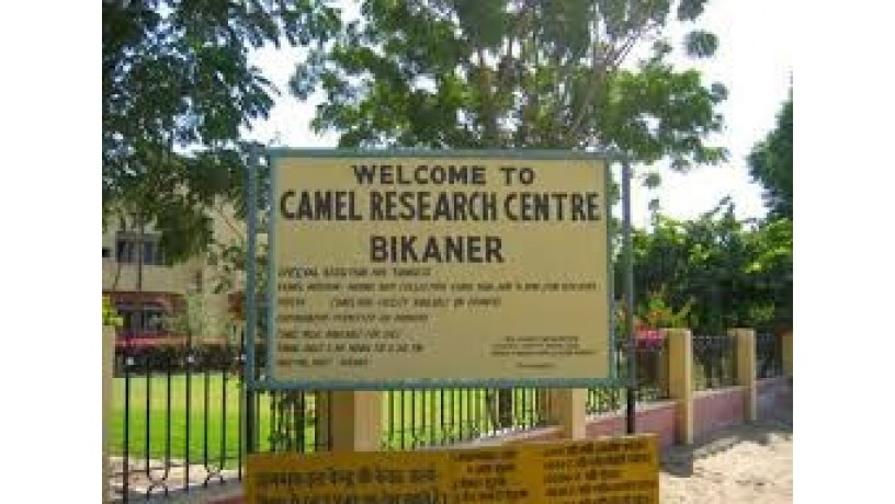 national-research-centre-on-camel-big-1